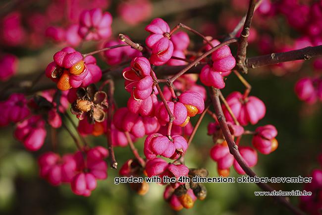 personal_garden_euonymus