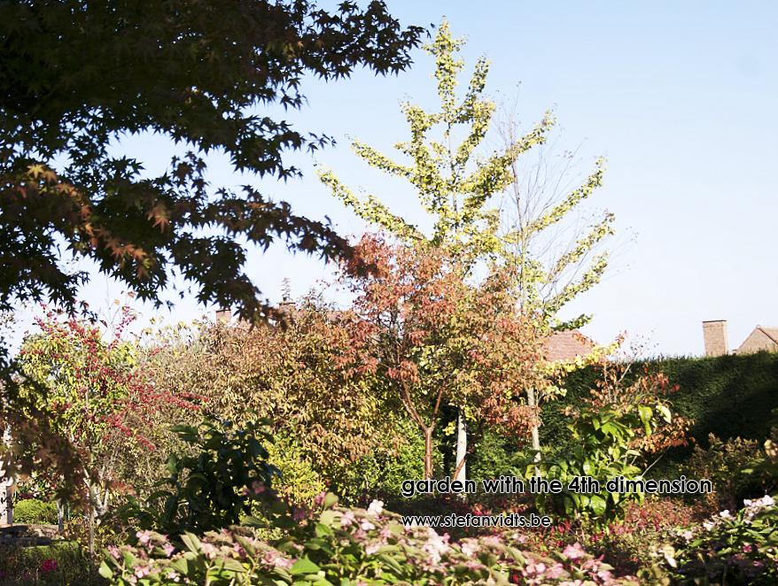 personal_garden_oktober_acer_griseum