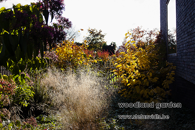 woodland_garden_mespelare_fall