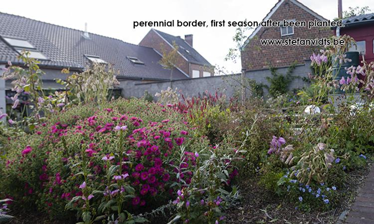 perrenial_border_25_10
