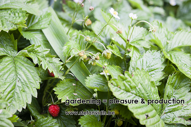 gardening_pleasure_production_0009