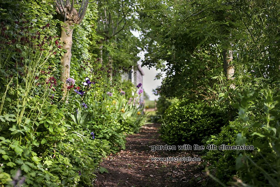 personal_garden_-001irissen_essenlaantje