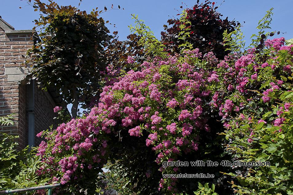 personal_garden_0004-rosa_maria_lisa_0