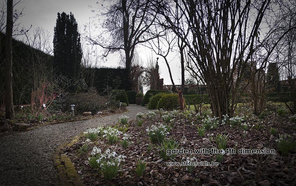 personal_garden_first_snowdrops