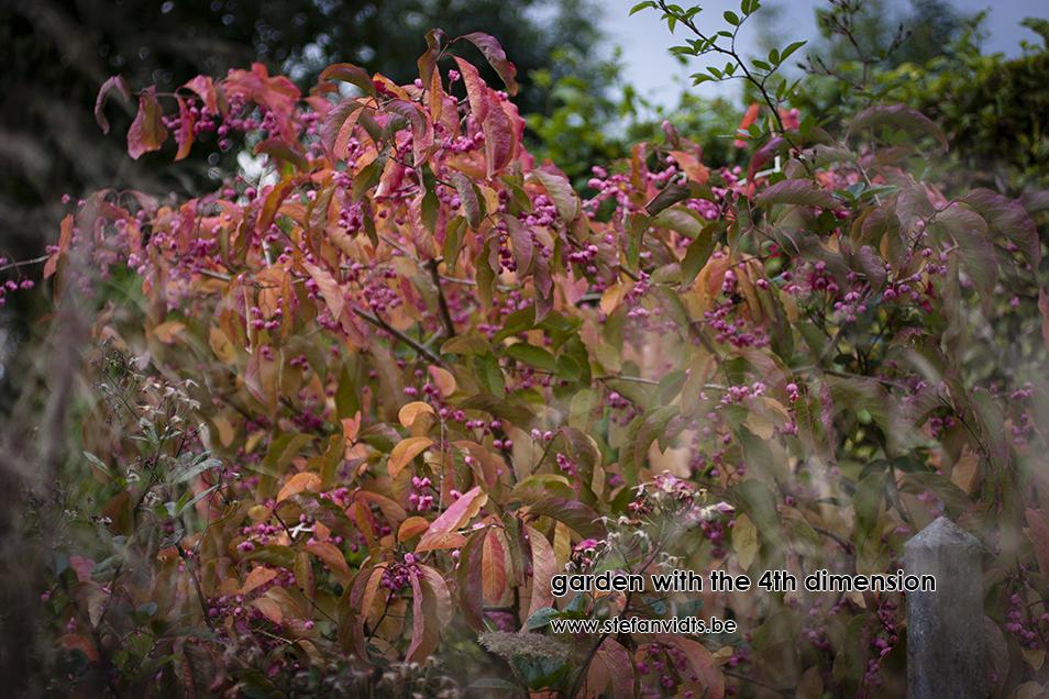 personal_garden_okt_euonymus_0084