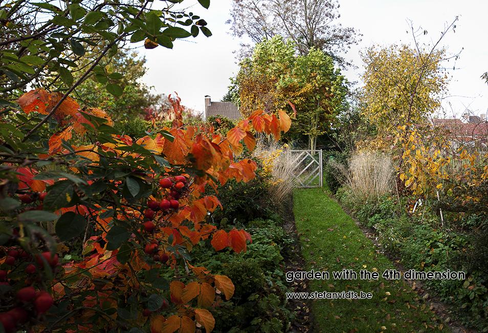 personal_garden_hamamelis_diannerosascharlachengluth02