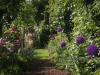 personal_garden_end_june-023
