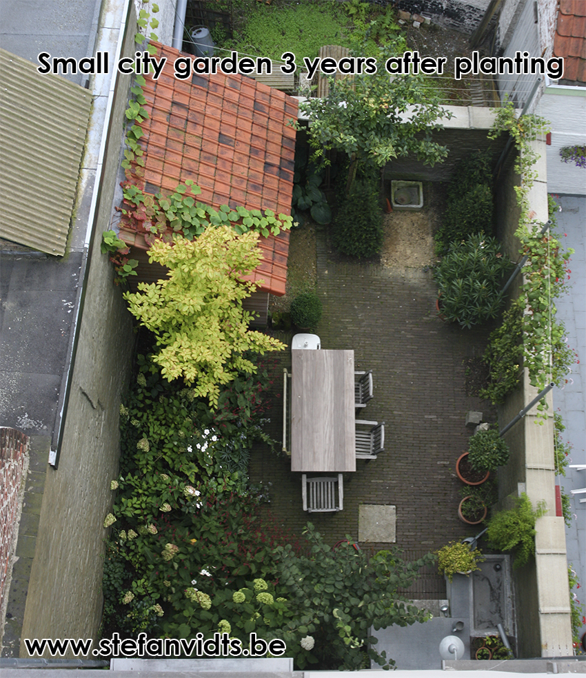 city_garden_3_years_later